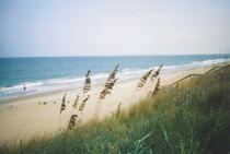 beachwithseatoats