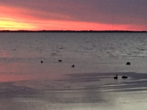 sunsetwithbirds